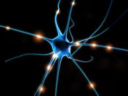 Nuestro cerebro y sus neuronas, las máquinas más eficientes de reconocer patrones